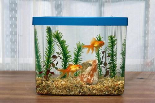 Почему умирают рыбки в аквариуме причины и меры борьбы