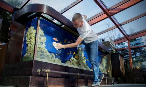 Почему в аквариуме вода мутная и что с этим делать?