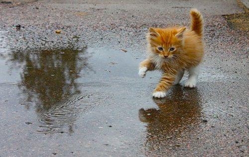 Кот чихает - что делать с целью лечения и диагностики