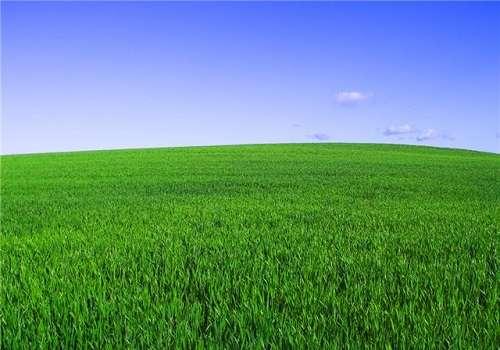 картинки для детей трава